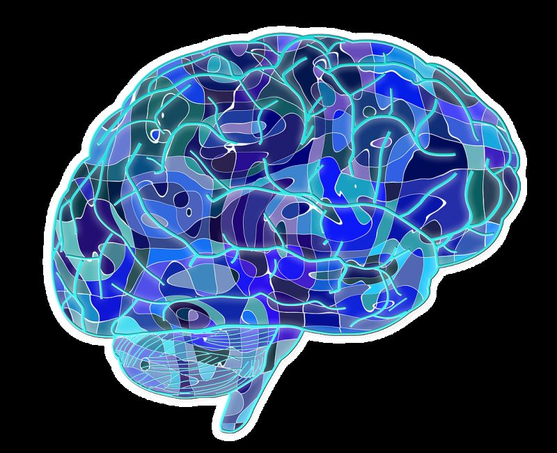 brain, biology, abstract